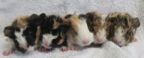 Talya, Aiko, Camilla, Jena und Finn