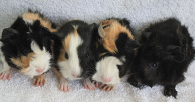 Vigo, Eddie, Bella, Mati