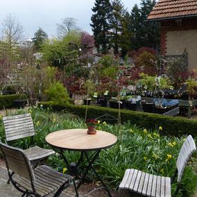 Das Café in der Königlichen Gartenakademie