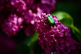 Photos de Fleur