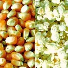 Popcornmais für Airpop