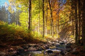Décharge en forêt