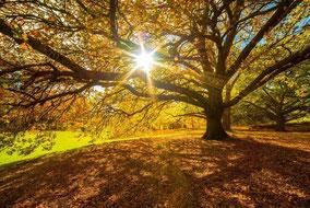 Goldener Herbst: Von den Alpen bis zu den Küsten wird es am Wochenende richtig schön, Foto: WetterOnline