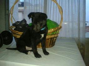 Bongo adoptado!