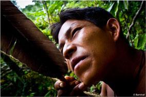 Los abundantes recursos de su hogar en la selva proporcionan a los matsés una dieta rica y variada. © James Vybiral/Survival