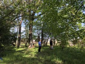 小山市ミネ不動産の代表峯雅士が休日子供と森で遊んでいる