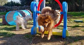 pension canine familiale les pattes libres hérault
