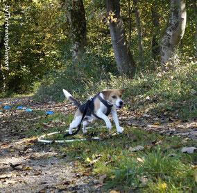 Tiertraining Diamant Gruppentraining für Hunde im Oktober 2019 in Salzburg - Hundetraining