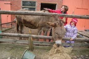 Judith Ehrenberg (links) leistet ihren Bundesfreiwilligendienst im Bauernhof-Kindergarten in Aschwarden. Auf dem Foto striegelt sie zusammen mit Ronja Esel Niklas das Fell. GKE·FOTOS: GABRIELA KELLER