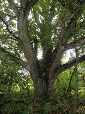 stage énergie des arbres -02