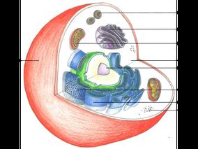 Tierische Zelle | Copyright by Michaela Engelmann 2020