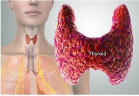 fonction thyroïdienne était aussi importante et pouvait être l'une des clés de notre santé ?