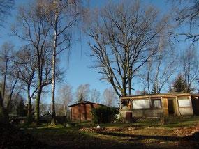 Garten + Terrasse