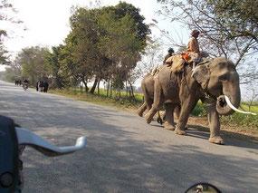対向車が象。