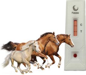 Drei Pferde gallopieren, im Hintergrund befindet sich die Fassisi TetaCheck Testkassette