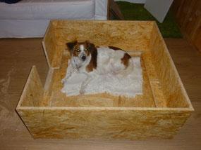 Wir glauben, DAS ist die Wurf-Kiste, aber wir sind uns nicht ganz sicher...