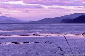 Quadra Island 2005