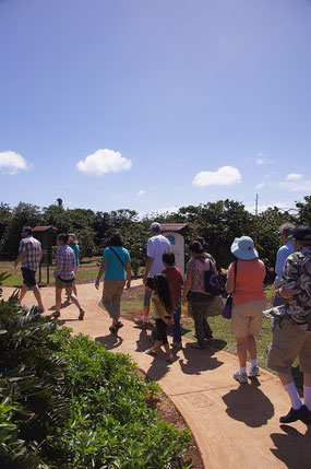 Kauai Coffee Company Guided walking tours are available at 10am, 1pm and 3pm every day.  It's good to know about cofffee!