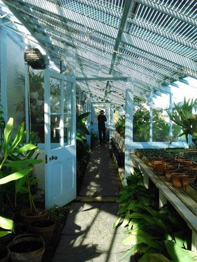 見たこともない熱帯の植物がたくさん保管されている。