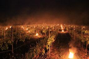 Frostfackeln zum Schutz der Weinstöcke