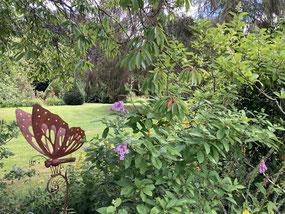 Hibiscus et hydrangeas 'Soeur Thérèse' et 'Sanguinea'