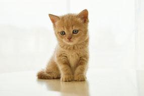 Kitten alleine