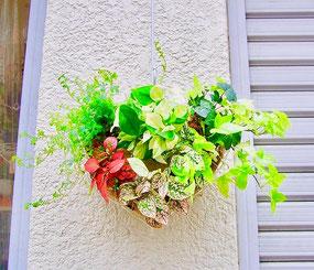 練馬桜台 ガーデニングショップ かのはの 。 生徒さんの作品です。壁掛けが出来る観葉植物のハートリースハンギング。根っこが付いているリースです。自分がチョイスして作った植物をお部屋に飾る贅沢ですよね。ガーデニングショップ かのはの hana教室