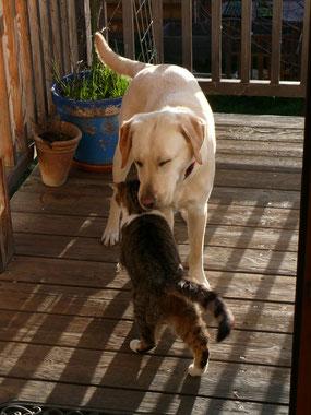 Unser Schmusehund Lucy mit ihrem besten Freund, Kater Oskar