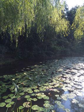 モネの「蓮池」をイメージした池