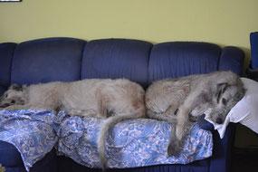 Weil Sunny aber auch so viel Platz braucht !
