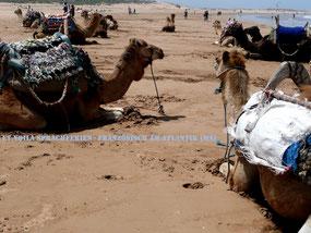 Essaouria am Atlantik in Marokko: mit der Entschleunigung kommt die Erholung! ET.Voilà Sprachferien - Französischkurs