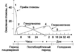 Гликогенолиз, Глюконеогенез, Безуглеводка, Северин
