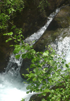 Wasserfall im Mavrovo Nationalpark [Foto: Danko Nikolovski (bearbeitet von Protect), CC BY-SA 3.0]