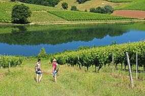 Hiking trail mountain bike vineyard Aydie (Vic-Bilh/Madiran)