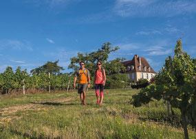 Hiking trail castle vineyard Crouseilles (Vic-Bilh)