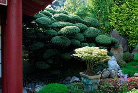 ''Japan-Alpin-Garden'' Gerda und Horst Schubert in Neuenburg