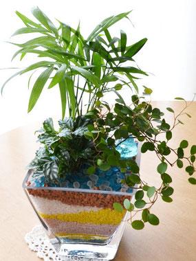 今月のレッスン、カラーサンドを使った観葉植物の寄せ植え