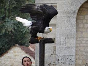 Bild: Greifvogelshow