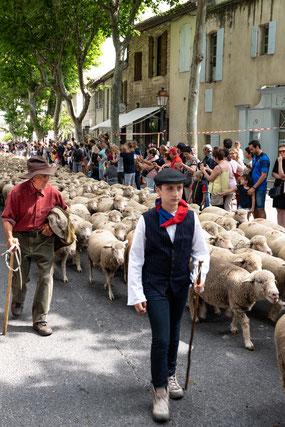 Bild: St.-Rémy-de-Provence, Féte de la Transhumance