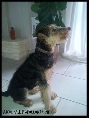 Jetzt wird der kleine Mann Attila gerufen, sonst würde immer der Nachbar beim rufen vor der Tür stehen :-)  (Dezember 2014)