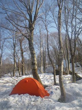 ブナ林の中、快適なテント場。