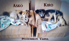 Hunde Kiro und Asko