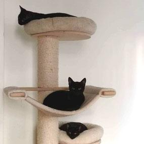 Katzen Ava, Amidala und Alysar