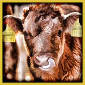 200 glückliche Stierkälber in Römerswil