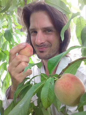 Peaches in the green house