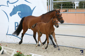 Feel Godd Dance, femelle New-Forest par Mikel (NL) et Quelly Pearl (par Willoway Piper's Bay)