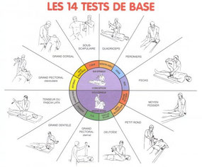 les 14 tests de base en Touch for Health