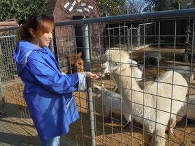 市内の動物園でボランティアを行う植木さん