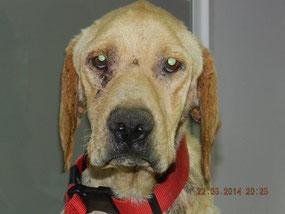 Rayo, Hund des Jahres 2014