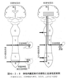 体性内臓反射の分節性と全身性反射例
